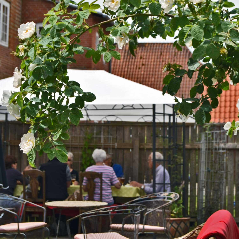 Rosenbusken blomstrer i Apothekerhaven, og i baggrunden får gæster frokost i skyggen